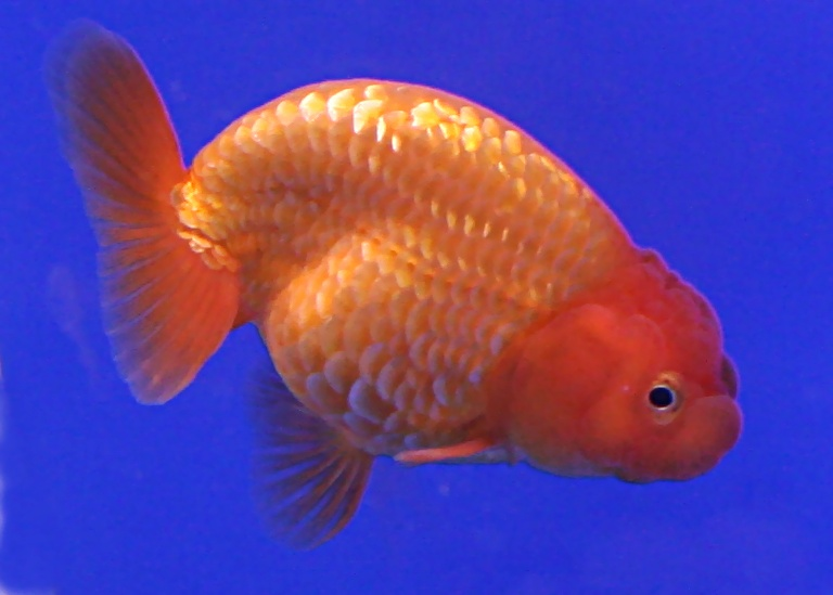 On leadership goldfish have no hiding place raj 39 s lab for Your inner fish summary