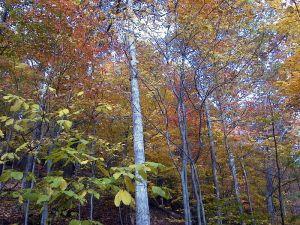 800px-AUT_2862_ForestWander