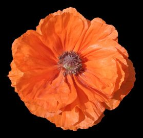 617px--_Flower_19_-