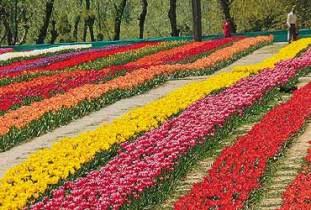 gardens-of-srinagar